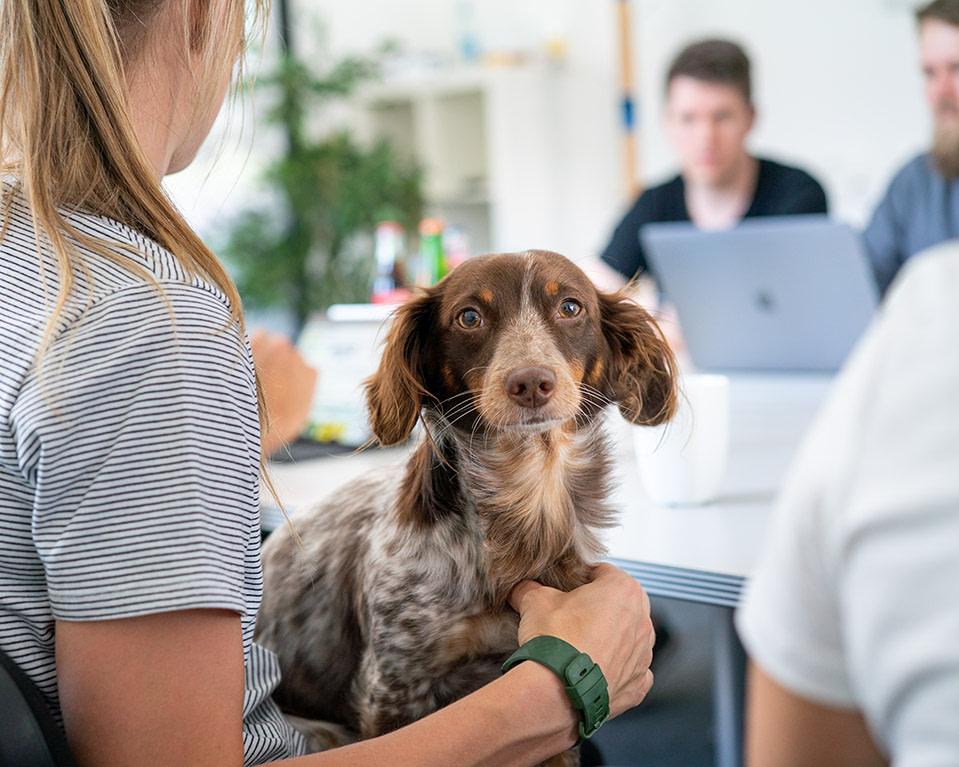 Firmenhund auf Schoß von Mitarbeiterin